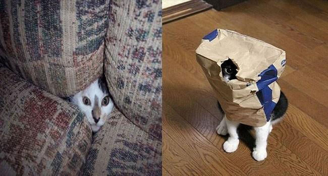 photos hide and seek cat photos funny photos Cats - 6305285