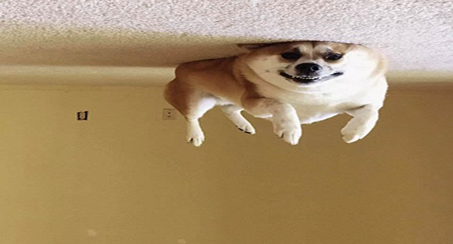 upside down pictures of dogs that make them look like balloons that drifted up to the ceiling