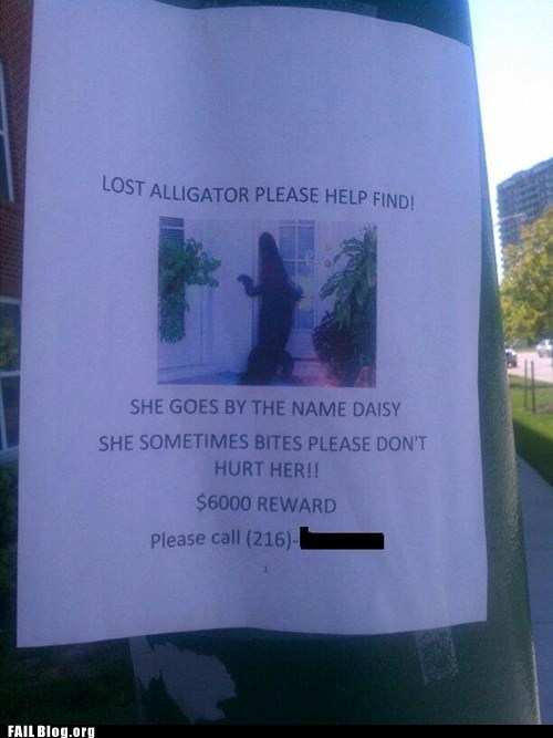 fail nation,flyer,g rated,Hall of Fame,lost alligator,reward