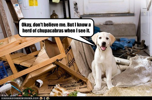 captions chupacabra destruction dogs golden lab it-wasnt it-wasnt-me lies mess messes