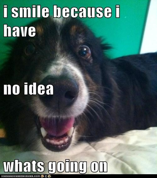 dogs,i have no idea what's goi,i-have-no-idea-whats-going-on,smile,what breed