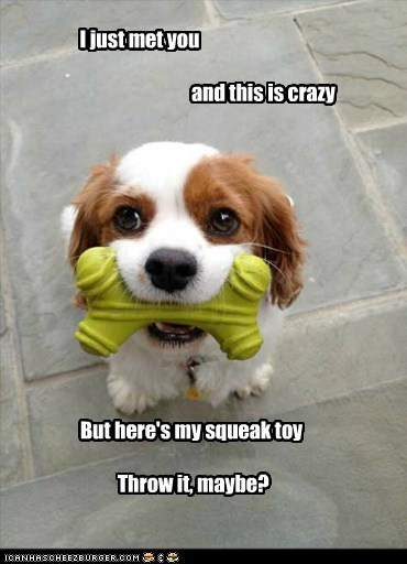 best of the week,call me maybe,dogs,fetch,Hall of Fame,spaniel,squeaky toy,toy