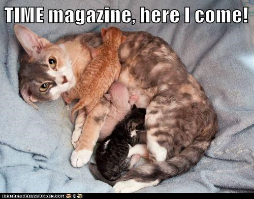 are you mom enough breastfeeding Cats food kitten lolcats mom moms nom nursing time time magazine - 6306971136