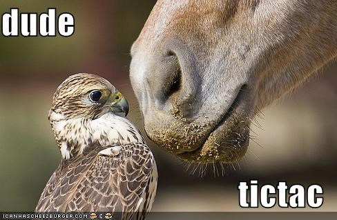 birds,breath,horses,tic tac