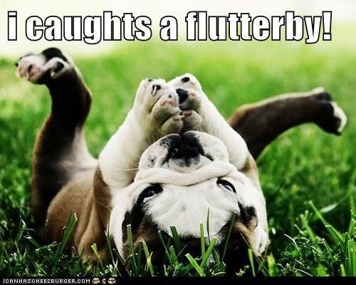 best of the week,bulldog,butterflies,captions,dogs,flutterby,grass,Hall of Fame,puppy,squee,summer