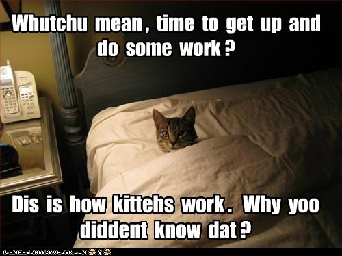 Whutchu mean , time to get up and do some work ? Dis is how kittehs work . Why yoo diddent know dat ?