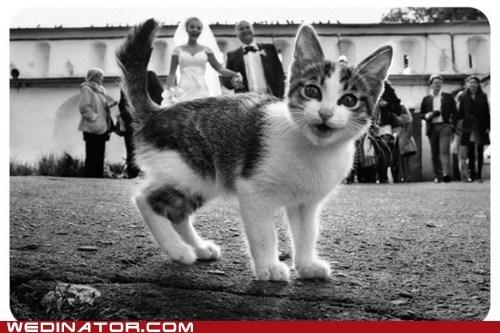 bride Cats funny wedding photos groom Hall of Fame photobomb - 6307252480