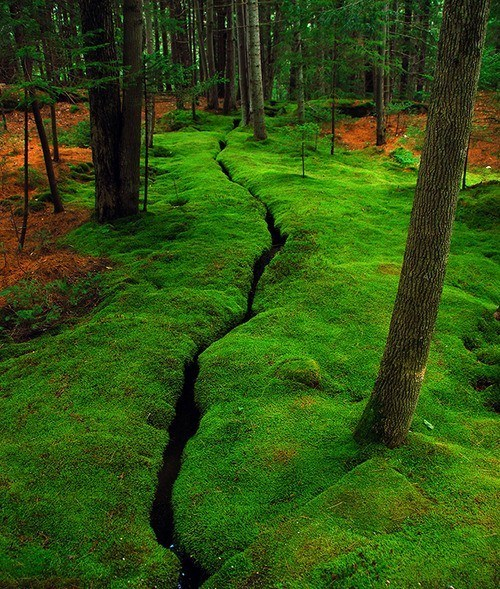 Forest island maine moss trees - 6307351040