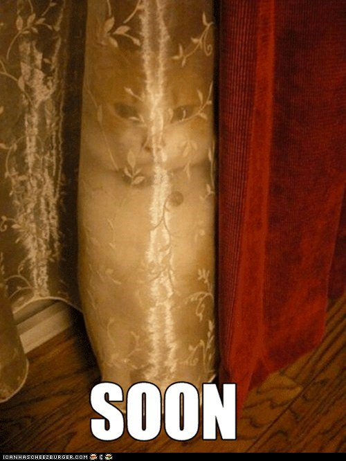 best of the week Cats curtains FAIL hiding Memes scary SOON - 6307363840