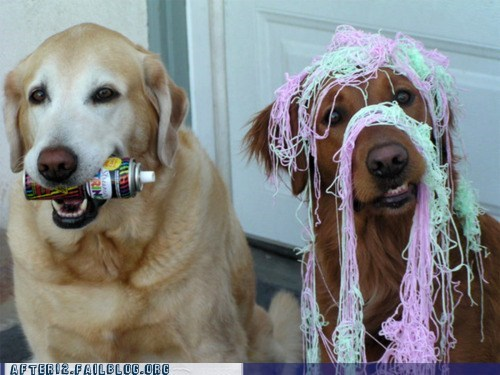cc,crunk critters,golden retriever,party animals,silly string,strung out