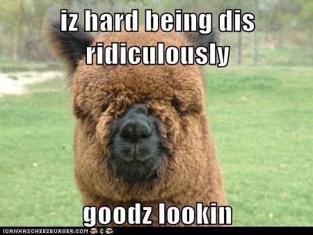 alpacas,bangs,captions,good looking,hair,its-hard,llama,llamas,ridiculous