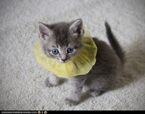 Cats,collar,cyoot kitteh of teh day,do not want,fashion,kitten,necklace,scrunchies