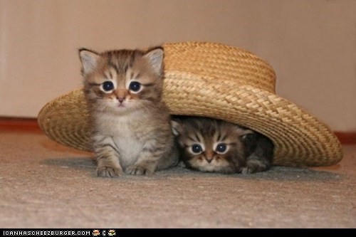 Cats,cowboy hats,cyoot kitteh of teh day,hats,kitten,straw hats,two cats,underneath