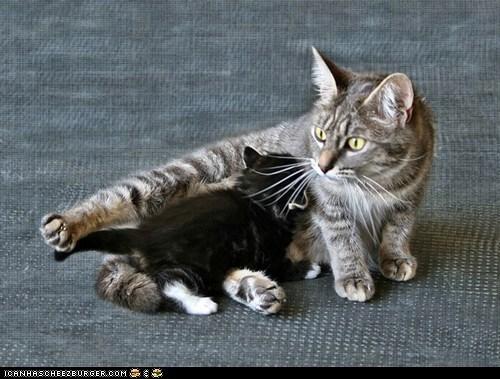 Cats cyoot kitteh of teh day feeding kitten mama milk moms newborns nursing - 6308723712