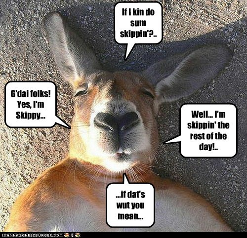 Just ask the koala...
