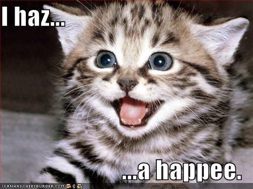 happy kitten lolcats lolkittehs