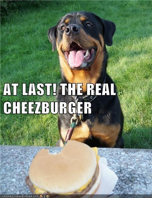 Cheezburger Image 6309443840