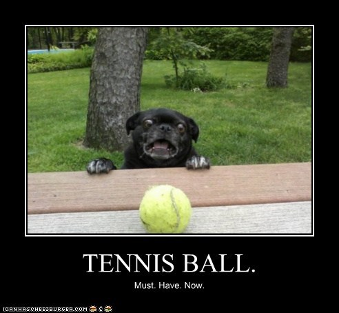 TENNIS BALL. Must. Have. Now.