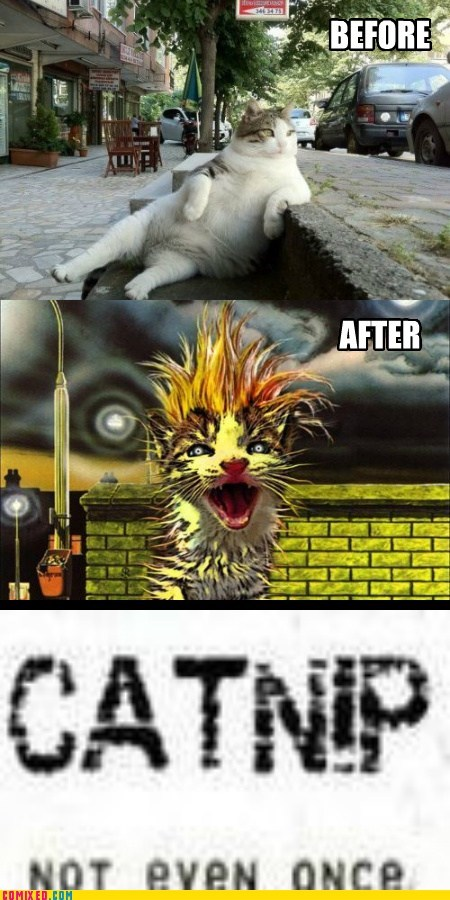 catnip Not Even Once the internets