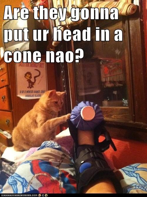 broken cone head hurt injured leg vet - 6310074880