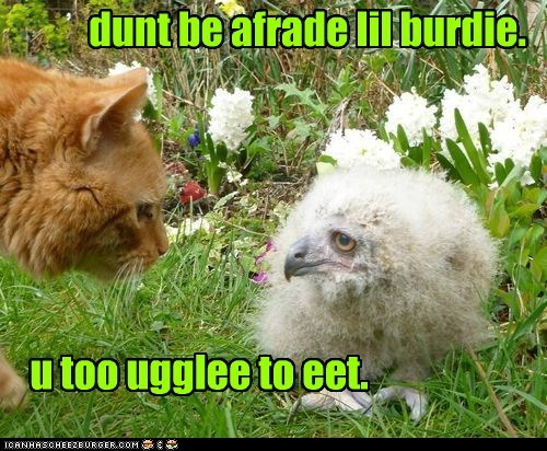 dunt be afrade lil burdie. u too ugglee to eet.