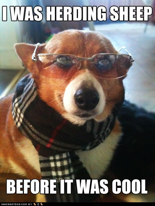 corgi,dogs,herding,Hipster Dog,scarf,sheep,sunglasses