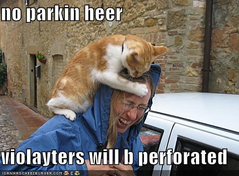 attacking biting cars hoomans humans lolcats parking - 631060736