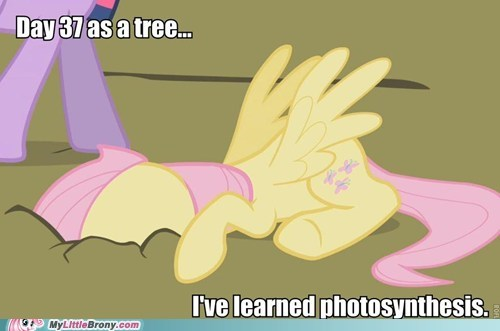 fluttershy meme photosynthesis tree - 6310631680