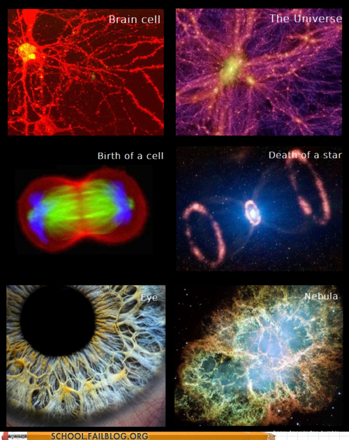 birth of a cell,brain cell,death of a star,eye,nebula,star stuff,the universe