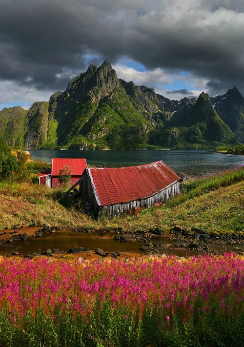 fjords,flowers,Hall of Fame,mountain,Norway,river