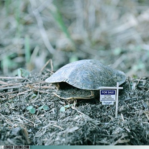 for sale shell turtle shell - 6310744832