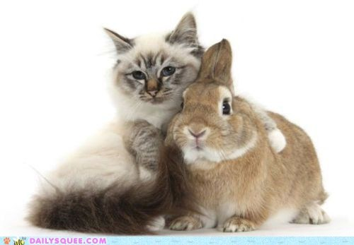 best friends bunny cat Hall of Fame holiday hug - 6310898432