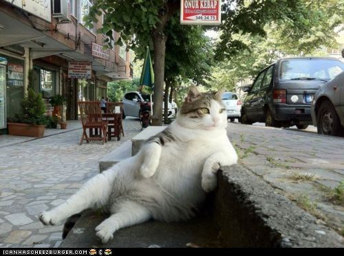 best of the week,Cats,human-like,Laid Back,laid back cat,Memes,photoshop,remixes,sitting