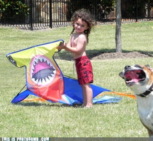 animal Animal Bomb dogs kids kite shark