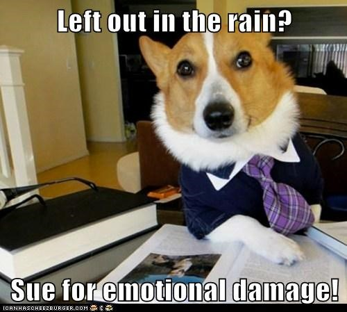 corgis,dogs,emotional damage,Lawyer Dog,Lawyers,Memes,rain,sue