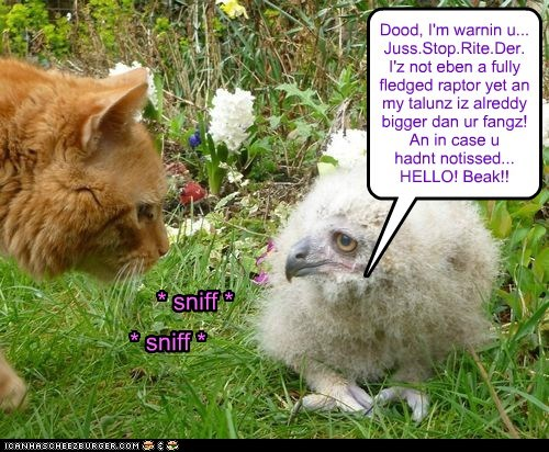 Dood, I'm warnin u... Juss.Stop.Rite.Der. I'z not eben a fully fledged raptor yet an my talunz iz alreddy bigger dan ur fangz! An in case u hadnt notissed... HELLO! Beak!! * sniff * * sniff *