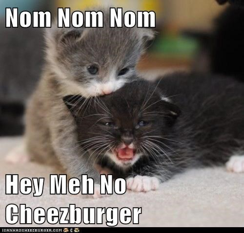 Cheezburger Image 6311848704