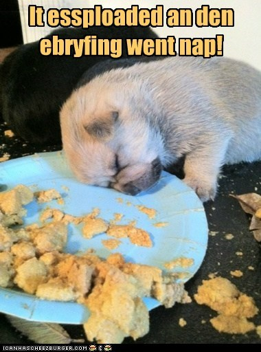 dogs,puppy,nap attack,what breed,noms,sleeping,food coma,eating,categoryimage,lolcats