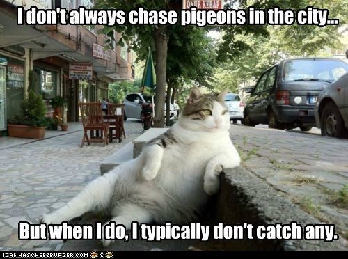 I don't always chase pigeons in the city... But when I do, I typically don't catch any.