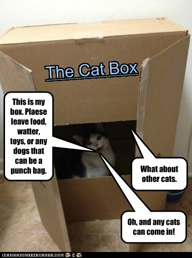 This is my box. Plaese leave food, watter, toys, or any dogs that can be a punch bag. The Cat Box What about other cats. Oh, and any cats can come in!