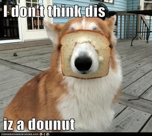 bread breading corgi dogs doughnuts - 6313306880