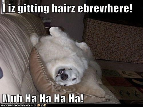 I iz gitting hairz ebrewhere! Muh Ha Ha Ha Ha!