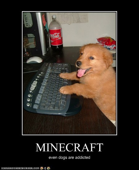 MINECRAFT even dogs are addicted