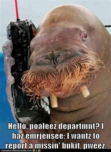 blue bukkit bukkit call lolrus phone police police department report walrus - 6313673984