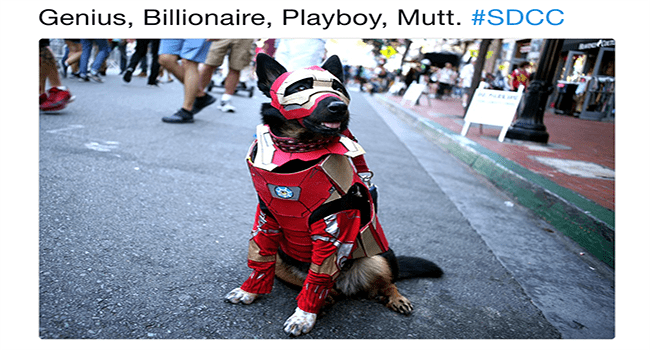 dogs cute dogs twitter comic con cute funny dogs lol tweets superheroes funny - 6313733