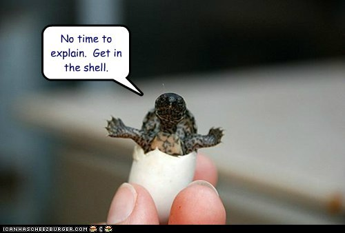 No time to explain. Get in the shell.