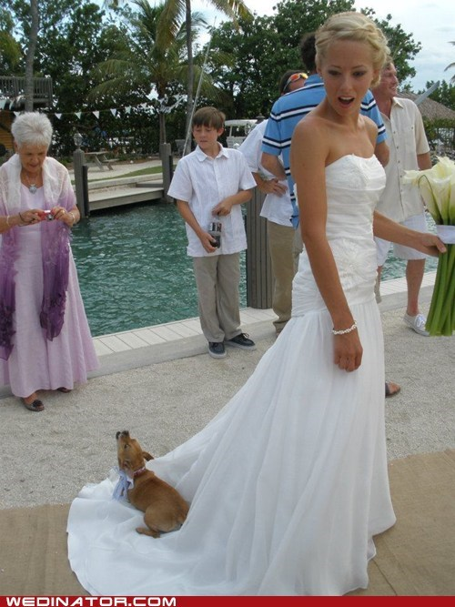 bride,dogs,funny wedding photos,wedding dress