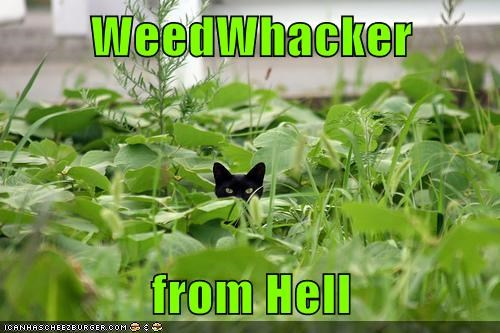 WeedWhacker from Hell
