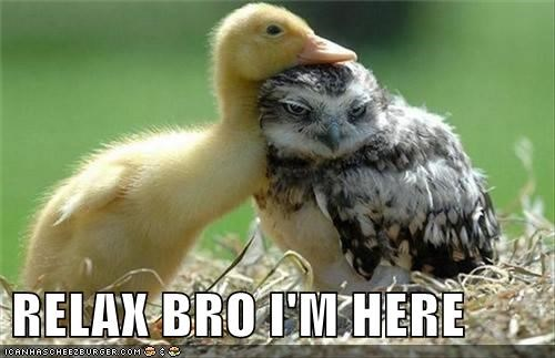 Cute and funny animal meme of an owl and a duckling cuddling and comforting each other.