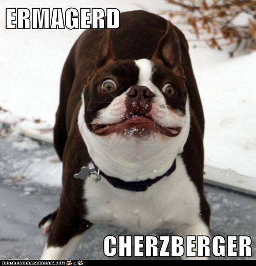 Cheezburger Image 6314231552